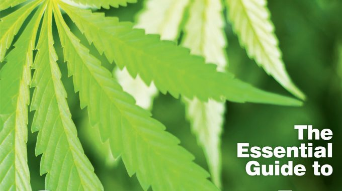 16 The Essential Guide To Cannabis