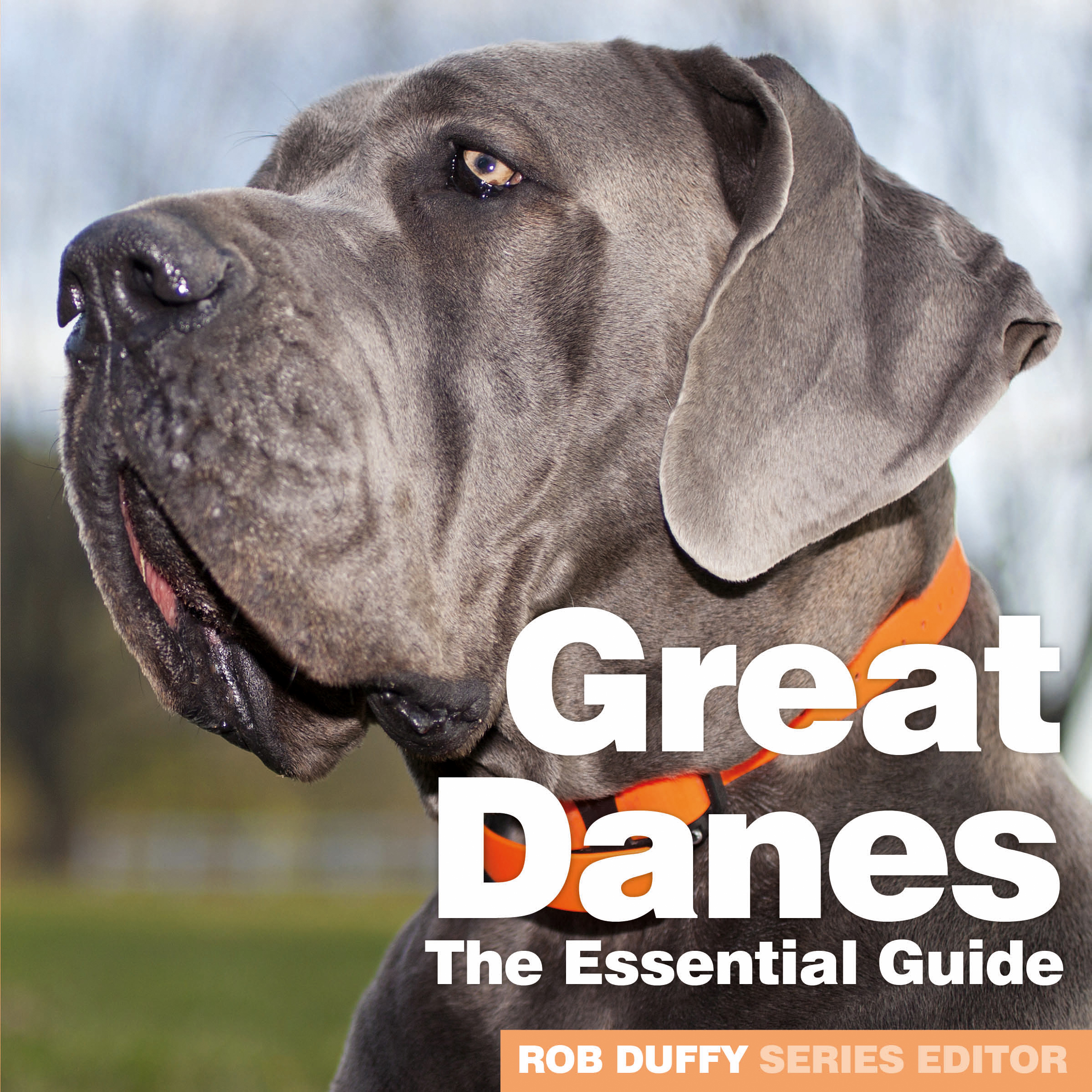 Great Danes The Essential Guide