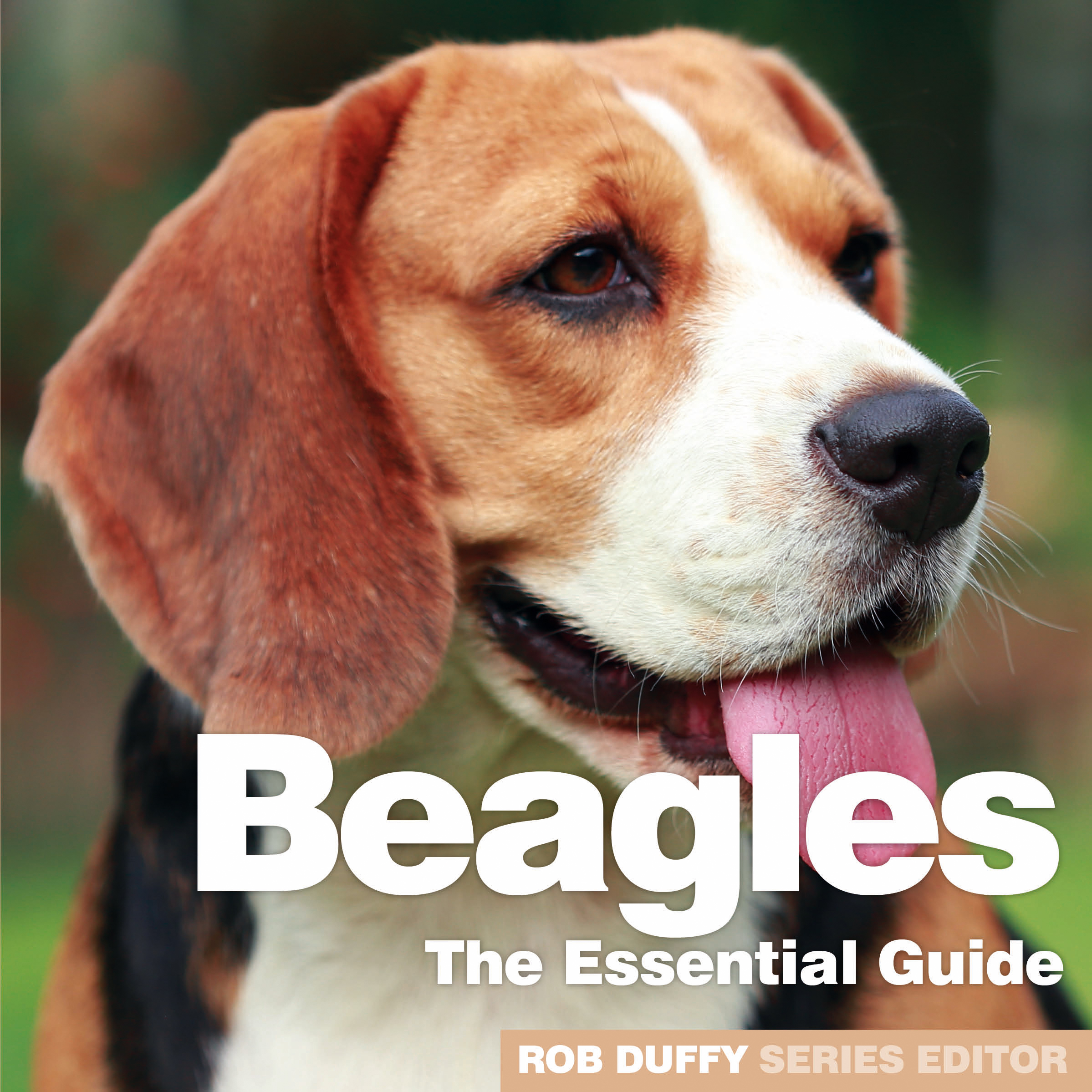 Beagles The Essential Guide