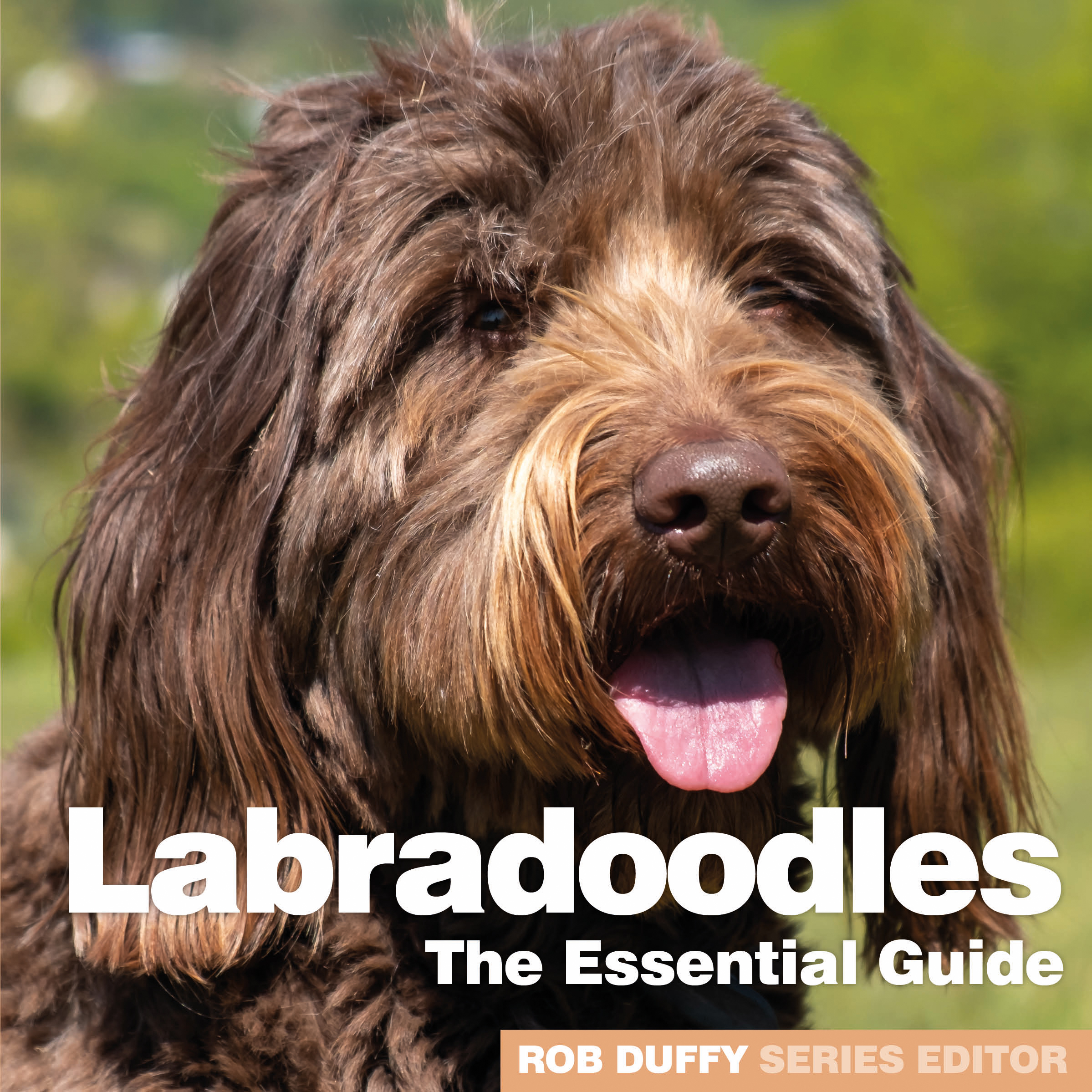 Labradoodles The Essential Guide