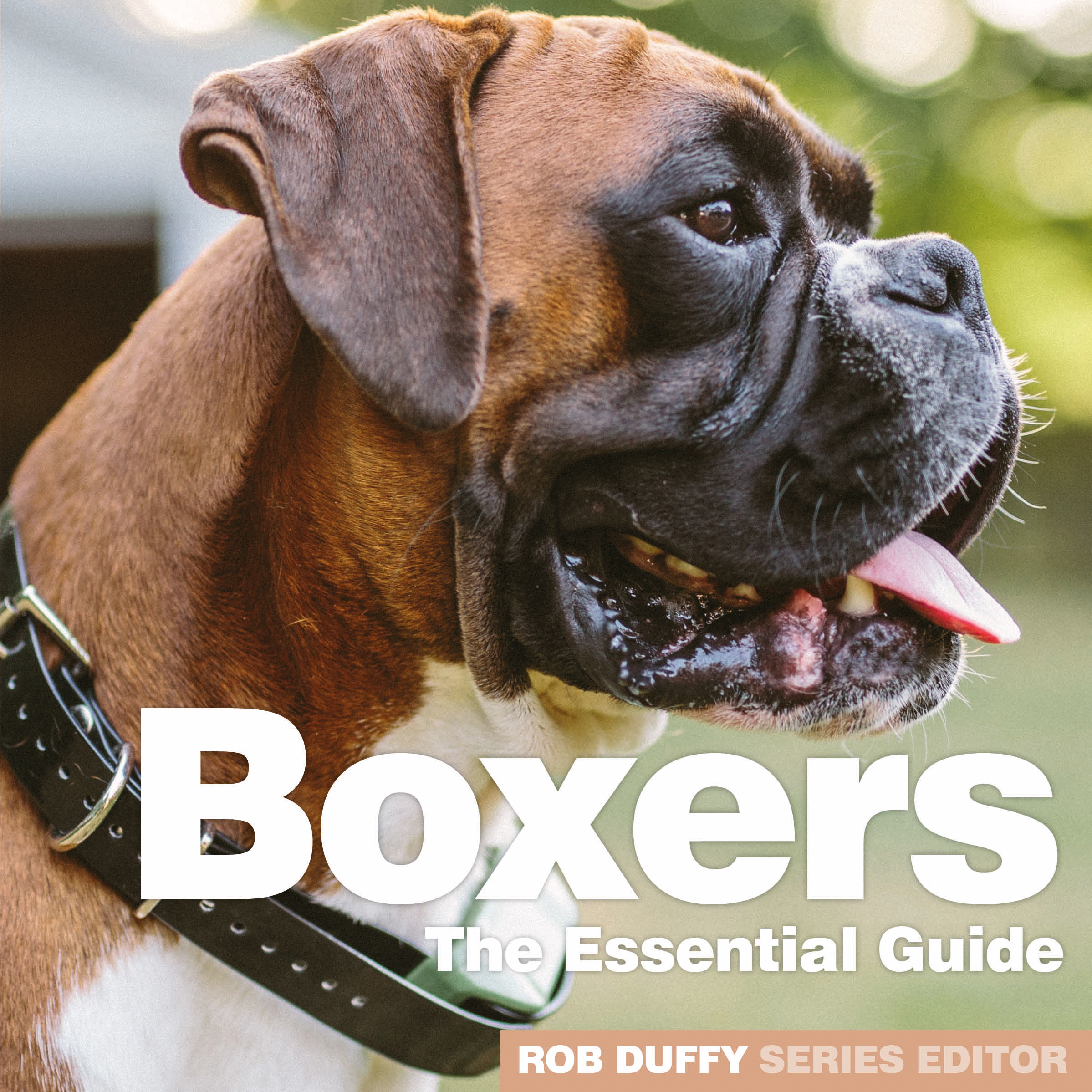 Boxers The Essential Guide