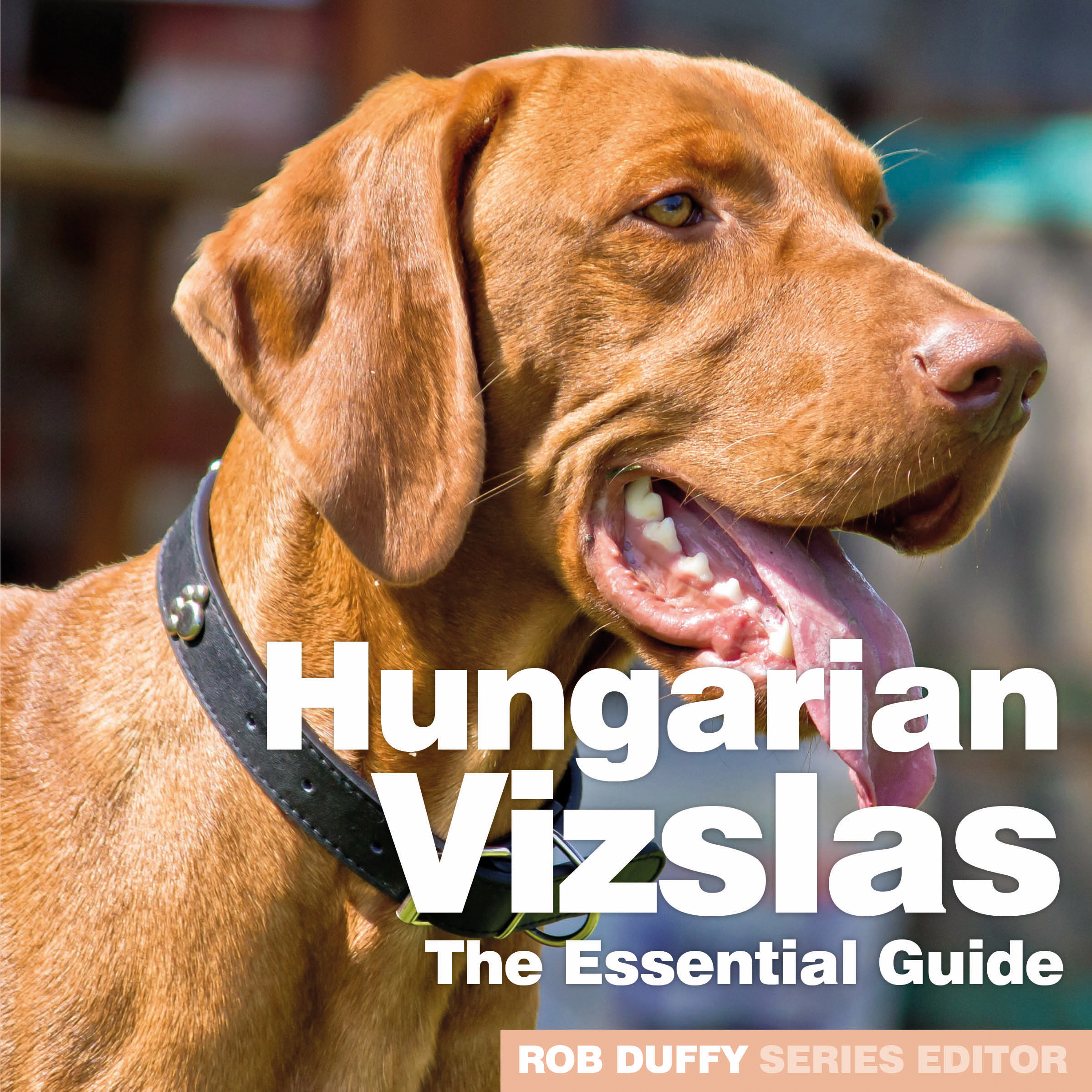 Hungarian Vizslas The Essential Guide