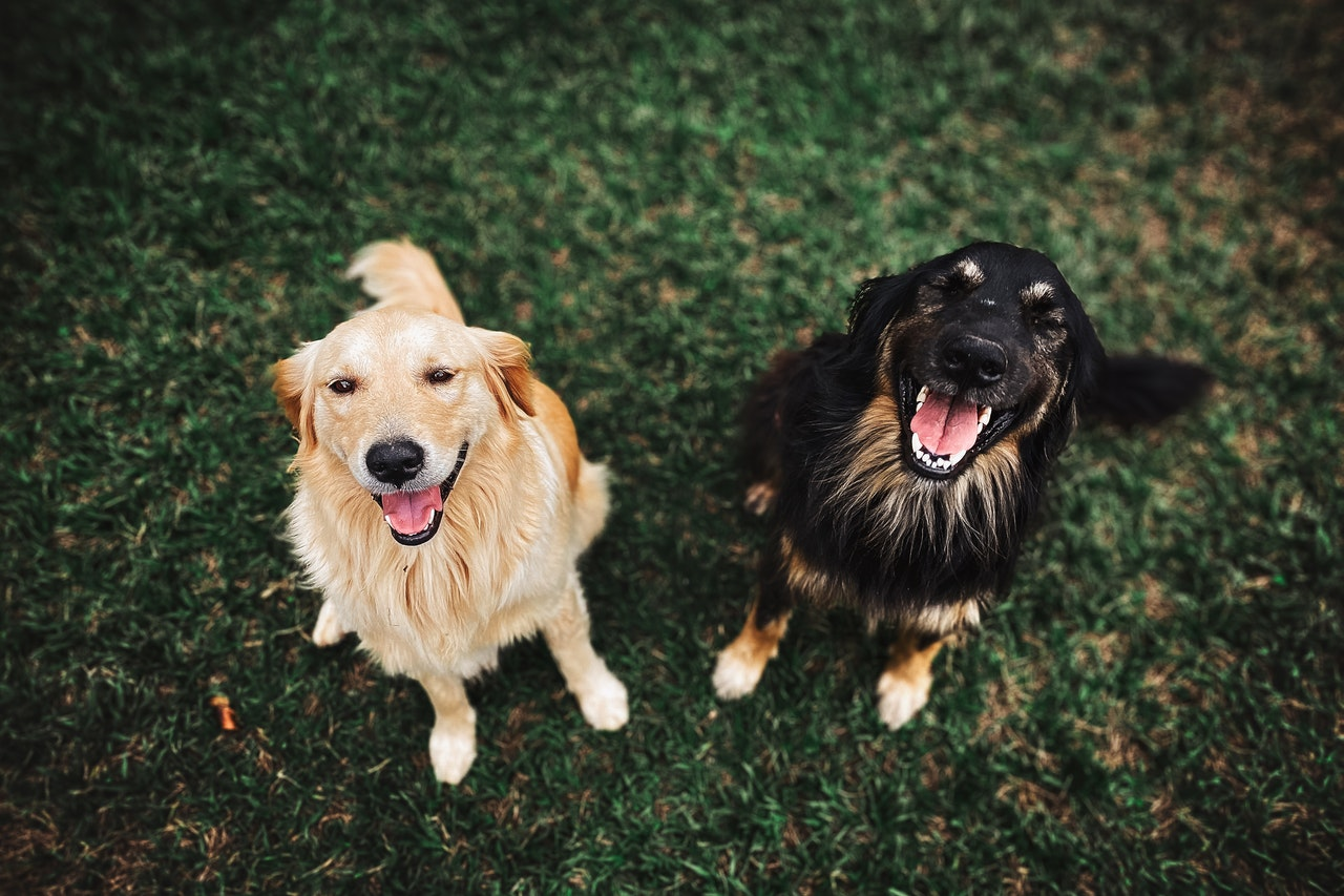 A Complete Guide To Rehoming A Rescue Dog